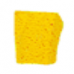 Derpy Sponge